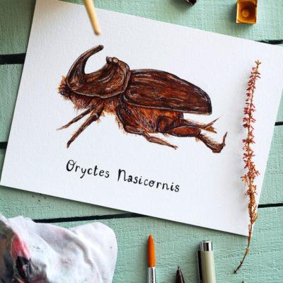 Day 14 - Oryctes Nasicornis