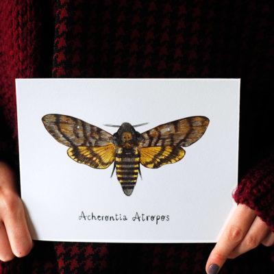 Day 6 - Acherontia atropos