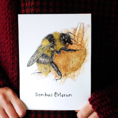 Day 11 - Bombus ortorum