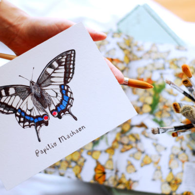 Day 19 - Papilio machaon