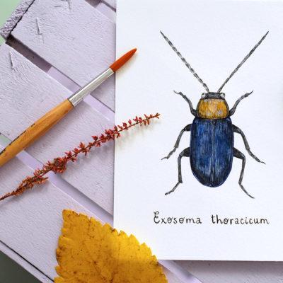Day 23 - Exosoma thoracicum